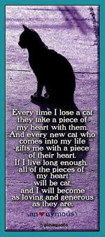 Cat Chat & Meme's on Pinterest | Cats, Cat Memes and Kitty via Relatably.com