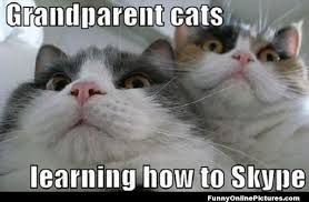 Pin by Prissy Nonee on JUST CAT MEMES, CUZ THEY'RE FUN   Pinterest ... via Relatably.com