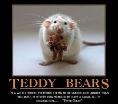 teddy bear memes (2)   Collection   Pinterest   Bear Meme, Teddy ... via Relatably.com