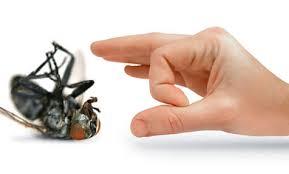 شركة مكافحة حشرات بخميس مشيط Images?q=tbn:ANd9GcSrsA9XgJihLRlvaqB3jQisniJrS-boYdlkMscJ-D_XC1zvbZYqLA