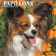 <b>Papillon</b> Spanish Toy Spaniel Gifts Décor Collectibles