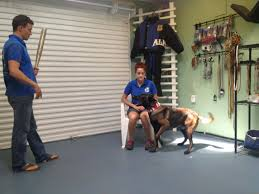 <b>Protection Dog Training</b>