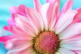 2,000 Beautiful, HD <b>Flower Wallpapers</b> - Pixabay