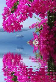 Image result for biển yêu thương