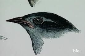 Charles Darwin - The Galapogos - Biography.com