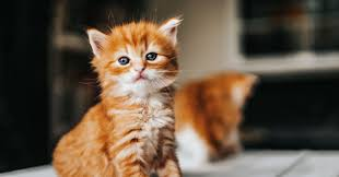 200+ <b>Cute Cat</b> Names for Every Kind of Kitty | Daily Paws