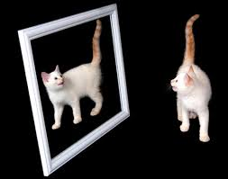 Image result for pictures of copycat