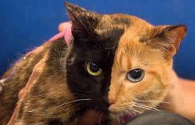 Venus the Two-Faced <b>Cat</b> Still a <b>Mystery</b>
