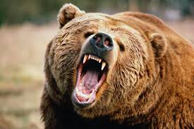 Image result for russian bear