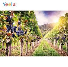 <b>Yeele</b> Orchard Grape Fruit Tree Field Summer Vintage Photography ...