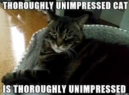 Thoroughly Unimpressed Cat - Meme on Imgur via Relatably.com
