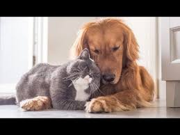 <b>CATS AND DOGS</b> Awesome Friendship - Funny <b>Cat and Dog</b> Vines ...