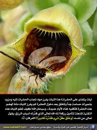 النباتات العالم