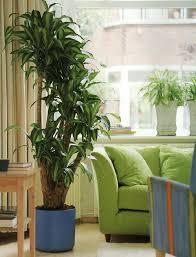 Соло на зеленой волне: крупные растения в интерьере   Дизайн ...