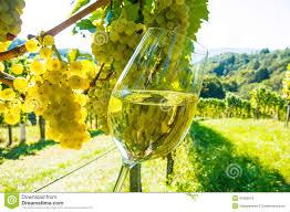 Image result for free image of a vineyard