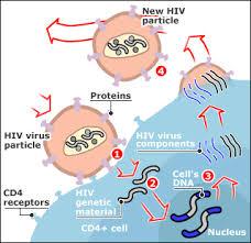 L'HIV: CHI LO CONOSCE LO EVITA!