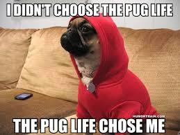 cute dog meme | Tumblr via Relatably.com