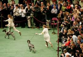 Home - German Shorthaired Pointer Club of Minnesota, Inc.