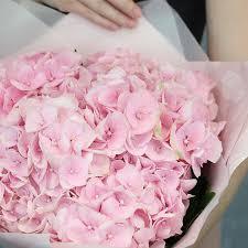 Купить цветы <b>букет 5 розовых гортензий</b> в стильной упаковке в ...
