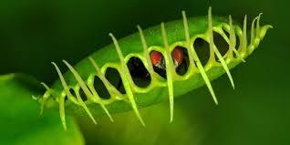 Risultati immagini per piante carnivore