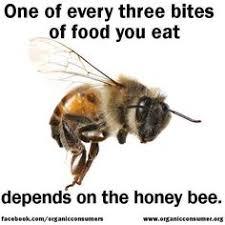 Resultat d'imatges de save bees