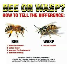 Bee=good. | Wasp=Asshole | Bawhahaha | Pinterest | Bees via Relatably.com