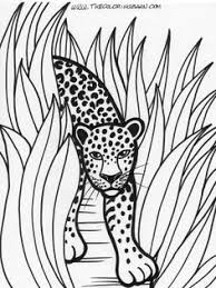 Small Picture Free Rainforest Coloring Pages Rainforest Coloring Sheets Free