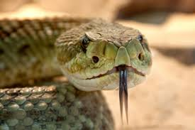How Snake <b>Venom</b> Works