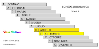 Gentiana ciliata [Genziana cigliata] - Flora Italiana