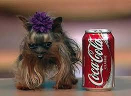 Photos insolites de chiens Images?q=tbn:ANd9GcSuUsf_jI4i-r_arQ1tQx8PU6CRmhtEnl1X1gxdHxT9eRcxOVD5