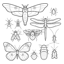 Small Picture Bugs To Color Apigram Com Coloring Coloring Pages