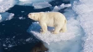 Bildergebnis für das eis schmilzt klimawandel