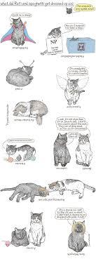 purim quiz meow etc purim quiz 1