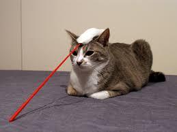 「黄昏猫」の画像検索結果