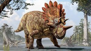 Знакомьтесь, регалицератопс - новый вид динозавра (новости ...