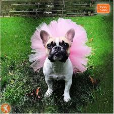 Блог :: Модные собаки :: <b>Модные юбки</b> для любимых питомиц