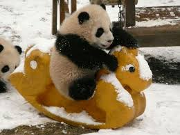 Image result for pictures of pandas