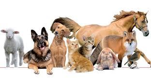 Risultati immagini per news animali