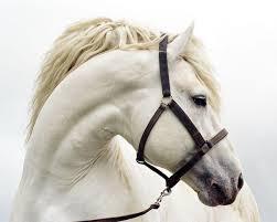 рік коня фото малюнок сценарій логотип