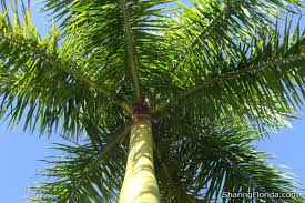 Image result for pictures Florida trees