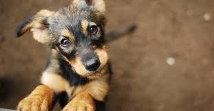 <b>Puppies</b> for Adoption | Petfinder