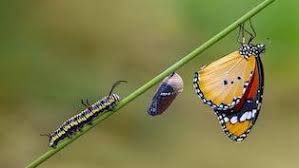 Do <b>Butterflies</b> Challenge the Meaning of Species? - Facts So ...