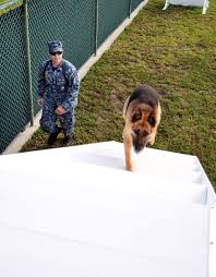 u s department of defense photo essay navy petty officer 2nd class justin sosa directs hopski a military working dog up