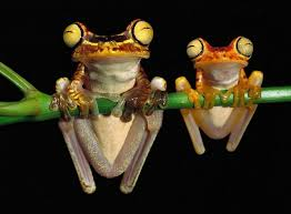Image result for pictures funny frogs