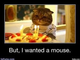 Sad Birthday Cat Meme Generator - Captionator Caption Generator ... via Relatably.com