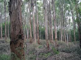 Image result for plantation audit
