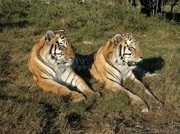 نتيجة بحث الصور عن صور حيوانات متوحشة