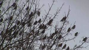 Image result for birds in trees