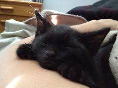 Image result for black cat sleeping pictures