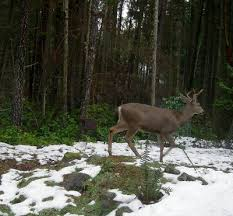 notes from the kelp » <b>Happy new deer</b>